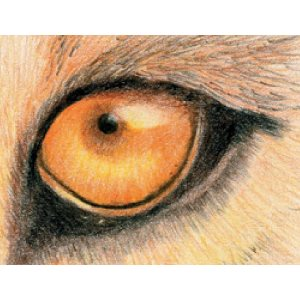 Studio: Lion eye project