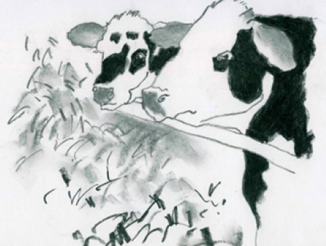 Natural Graphite: cow project