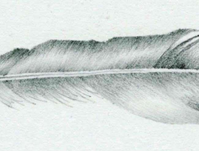 Graphic pencils: feather project