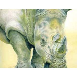 Watercolour pencils: Rhino project