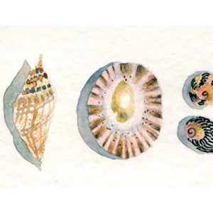Watercolour pencils: seashells project