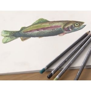 Graphitint pencils: draw a fish