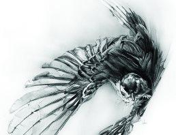 Vogel von Alexis Marcou