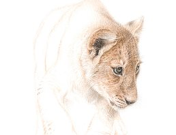 Lion Cub by Martin Aveling