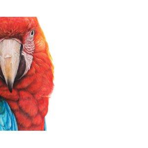 Macaw van Martin Aveling