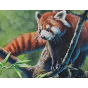 Panda Rouge par Lisa Lachri