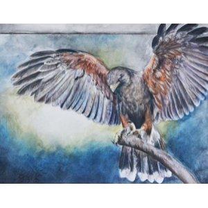 Eagle de Lisa Lachri