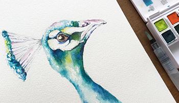 Inktense Peacock Paint-a-Long