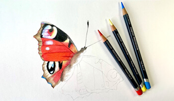 Procolour Butterfly